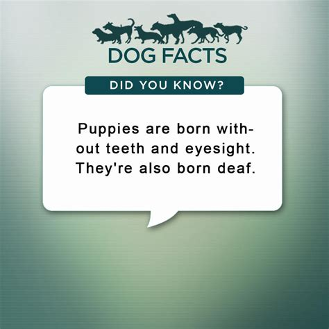 dogs facts facts animal planet