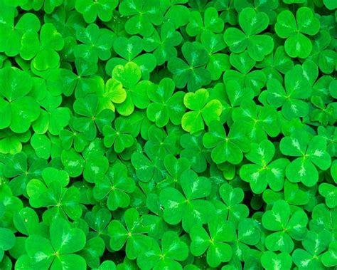 shamrock wallpapers wallpaper cave