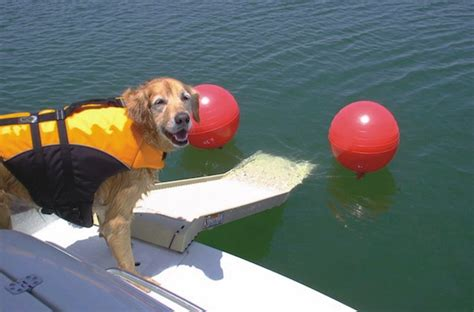 homemade dog ladder for boat boat projects rs for dogs product reviews diy