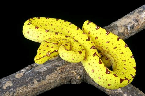 snake colors 9 gorgeous snake species from around the world mnn