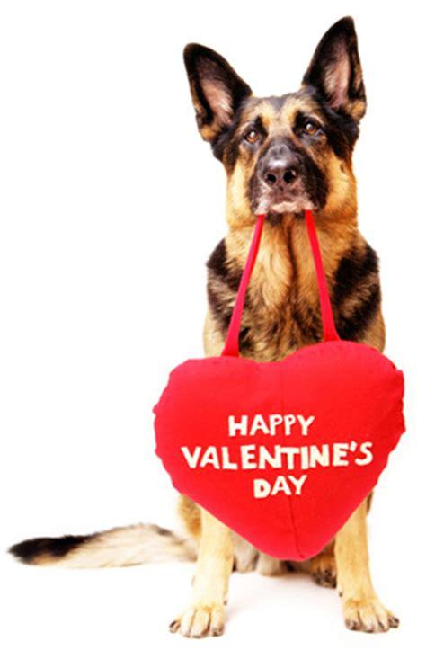 happy valentines day animals happy s day enjoy this s day poem