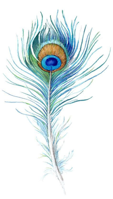 peacock feather tattoo design watercolor peacock feather search лого