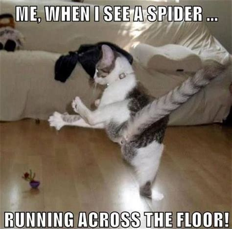I Saw A Spider Meme - best 25 spider meme ideas on pinterest funny friend