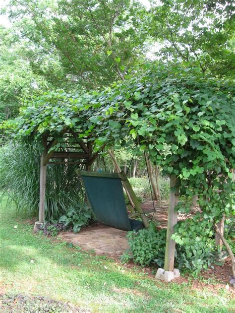 Backyard Grape Vine by 25 Best Ideas About Grape Arbor On Arbors