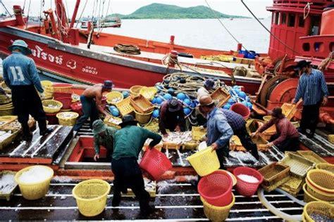 Pakan Udang Pokphand kabar bahari perbudakan di perdagangan ikan dunia kiara