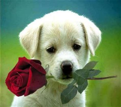 zedge imagenes de rosas download free doggy wallpapers for your mobile phone by