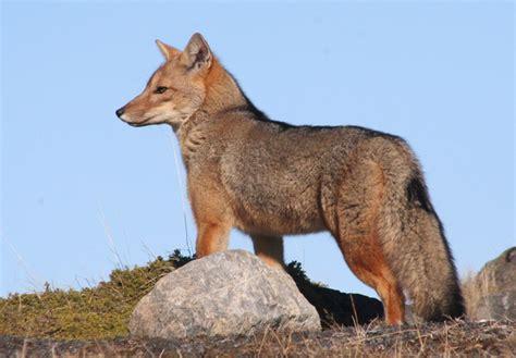 imagenes animales de la sierra medio natural un espacio compartido la fauna de la sierra