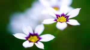 flower images flower bokeh wallpaper 2560x1600 22785