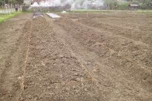 Bibit Bawang Merah Kapur 3 cara menanam bawang merah di rumah teknik mudah
