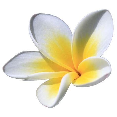 fiori spa lavana thai spa book your at sandton s luxurious