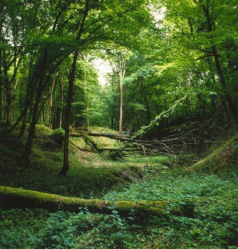 imagenes de naturaleza verdes foto gratis paisaje bosque verde naturaleza imagen