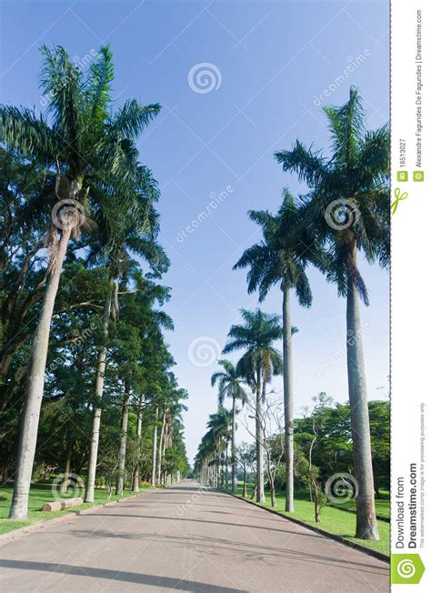 Brazil Palm Gardens palm trees in botanical gardens sao paulo royalty free stock photography image 16513027