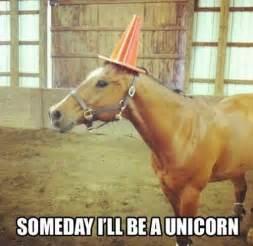 boxer dog rodeo pics photos pictures memes horse horse meme unicorn
