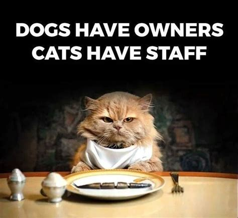 Dog Owner Meme - owners vs staff funny pictures quotes memes funny