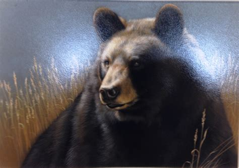 Home Design Hastings Mn by Minnesota Artist Wins Maryland Black Bear Conservation