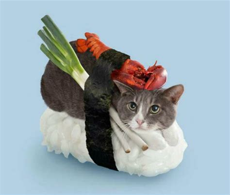 cat wallpaper nippon george stroumboulopoulos tonight sushi cats a new fun