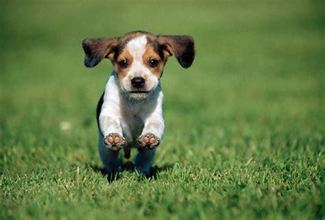 puppy running 404 not found