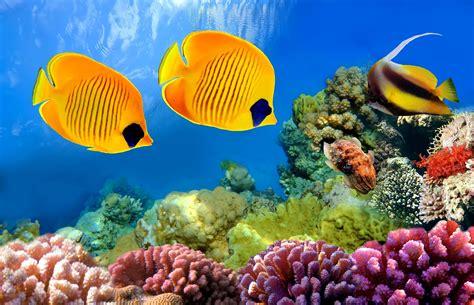 imagenes en full 4k peces de colores en 4k lanaturaleza es