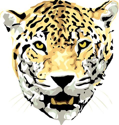 domain leopard image the graphics jaguar leopard animal 183 free vector graphic on pixabay