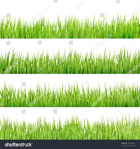 Green Also Search For Fresh Green Grass Isolated On White Background And