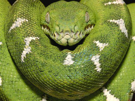 anaconda wallpaper anaconda snake high resolution best size hd wallpapers
