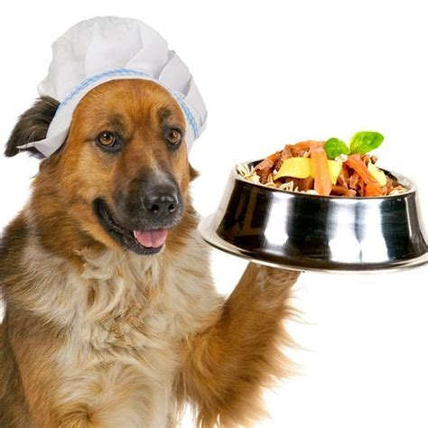 what veggies can dogs eat what vegetables can dogs eat 7 steps with images