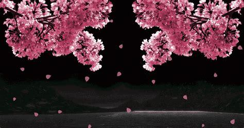wallpaper bunga animasi animasi bunga sakura bergerak gif gif images download
