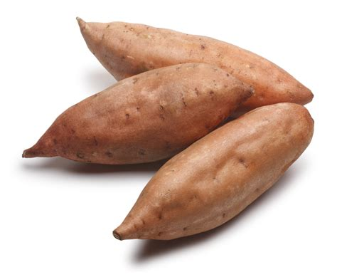 sweet potato wikipedia image gallery sweetpotato