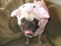 pig the pug costume ideas awesome costume firebrand push your hair out of your