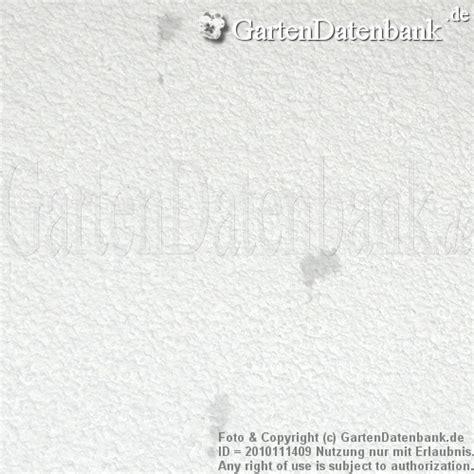 Rotweinflecken An Der Wand by Rotweinflecken An Wei 223 Er Wand Putz Entfernen Erfahrungen