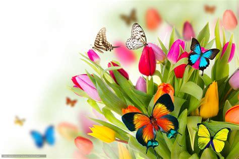 sfondi fiori e farfalle scaricare gli sfondi primavera fiori farfalle tulipani