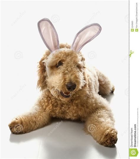 bunny ears for dogs in bunny ears stock photos image 2045663