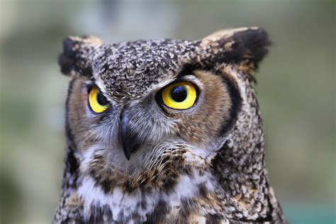 the meaning and symbolism of the word owl