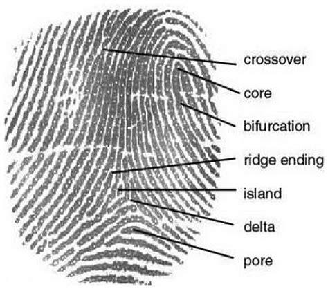 pattern types in fingerprint identification sensors free full text fingerprint identification