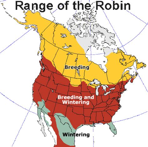 breeding and wintering range of the american robin
