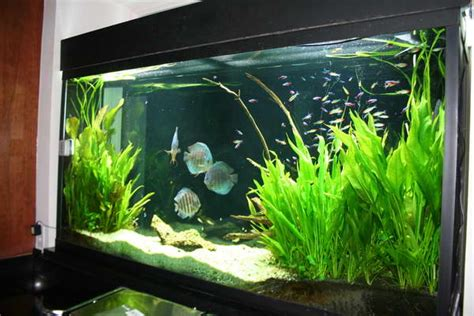 Aquarium Decor Ideas by Cool Aquarium Decoration Ideas Speedchicblog