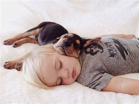 puppy nap nap time for and their dogs cuteness overflow