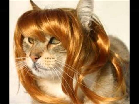 cat wig cats with wigs