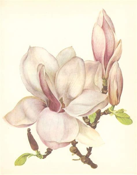 printable magnolia flowers vintage flower print magnolia botanical plant 67
