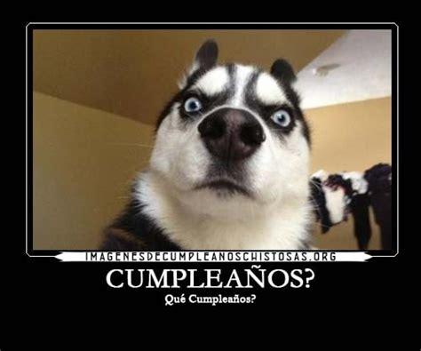imagenes graciosas de cumpleaños para mujeres felicitaciones de cumplea 241 os graciosas para whatsapp gratis