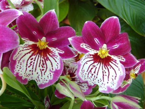 popular flower top 10 most popular flowers flowers gardening