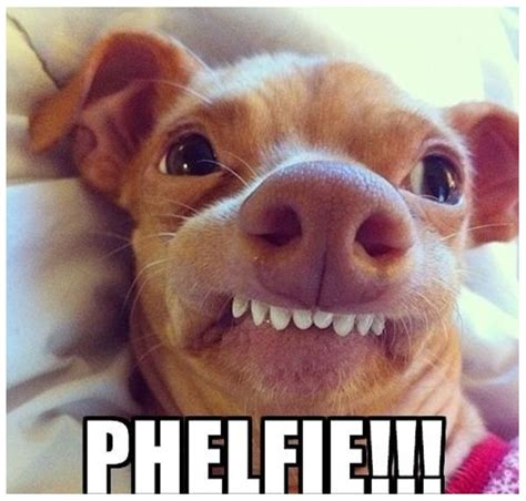 imagenes para whatsapp animales im 225 genes de risa con animales chistes de mascotas para