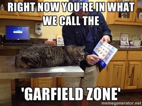 Vet Memes - 1000 images about veterinary humor on pinterest cats
