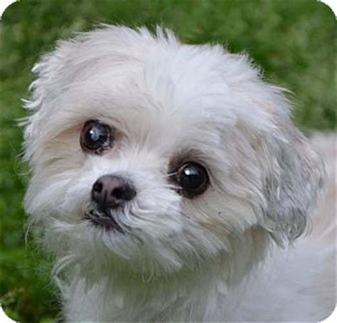 dogs for adoption in md small dogs for adoption breeds picture