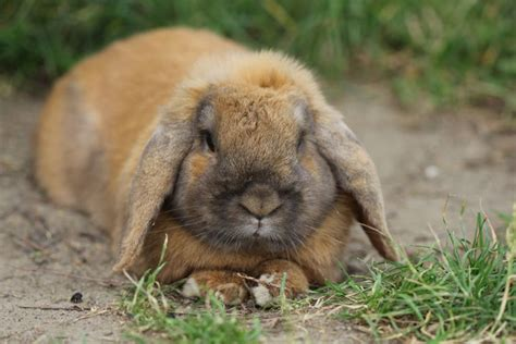 8 Tips On Caring For Pet Rabbits by Ten Tips For Keeping Your Rabbit Happy And Healthy For