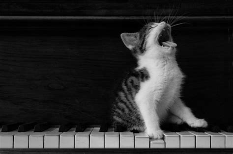 cat singing sings the blues a dreaming about wings