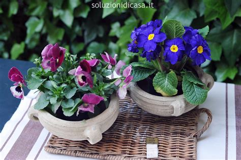 fiori viola a grappolo fiori viola a grappolo interesting grappoli di fiori