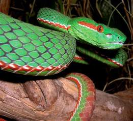 colorful snake new species of the eastern himalayas advocacy for animals