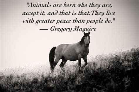 animal quotes 25 quotes about animals that will make you a better human