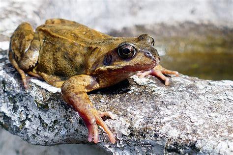 imagenes animales anfibios c 243 mo se reproducen los anfibios caracter 237 sticas y c 243 mo son